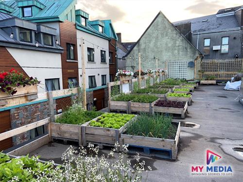cork rooftop farm documentary producer grett oconnor mymedia 6